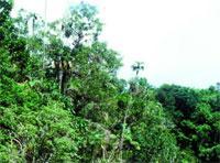 Sierra de Cubitas