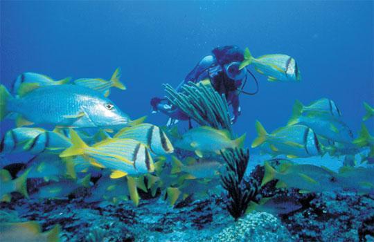 Colony Scuba Diving Center