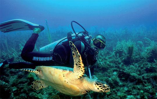 Scuba Diving Cayo Largo