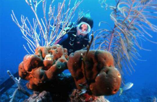 Cayo Coco Scuba Diving