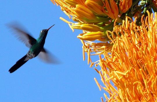 Endemic Birds Cuba