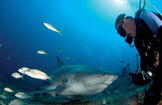 Shark's Friends International Diving Center