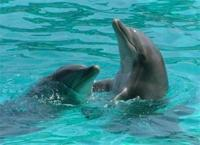 Delfinario y Banos con Delfines