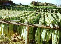 Cuba Tradicional