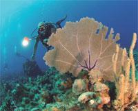 Scuba Diving  Site and Center: Barracuda Scuba Diving Center