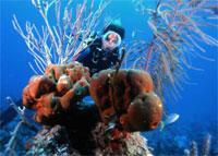 Scuba Diving  Site and Center: El Coral Scuba Diving Center