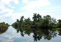 Senderos de Naturaleza: Sendero del Rio Hatiguanico, Cienaga de Zapata