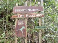 Nature Trails: Los Helechos Trail