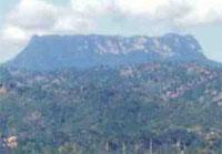Nature Trails: El Yunque Trail