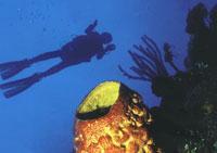 Scuba Diving  Site and Center: Maria la Gorda Scuba Diving Center