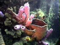 Scuba Diving  Site and Center: Cayo Largo Scuba Diving Center