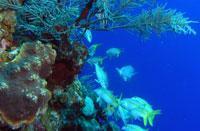 Scuba Diving  Site and Center: Cayo Blanco Scuba Diving Center