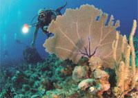 Scuba Diving  Site and Center: Eagle Ray Scuba Diving Center