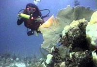 Scuba Diving  Site and Center: Avalon Scuba Diving Center
