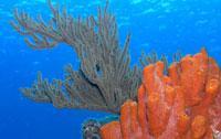 Scuba Diving  Site and Center: Sigua Scuba Diving Center