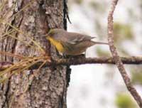 Birdwatching Trails: Birdwatching Paradise