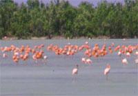 Birdwatching Trails: Guanaroca - Gavilanes Trail, Cienfuegos Ciudad