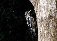 Birdwatching Trails: Los Helechos Birdwatching Trail