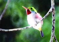 Birdwatching Trails: The Loma Atahalaya Challenge