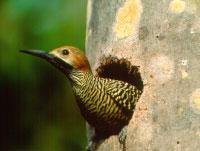 Birdwatching Trails: Colicambiada Birdwatching Trail