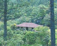 Areas of Natural Interest: Codina Park