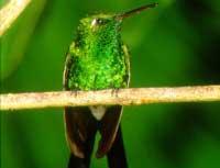 Birdwatching Trails: Birdwatching Topes de Collantes