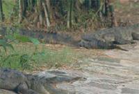 Areas of Natural Interest: Crocodile Lagoon