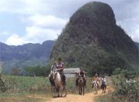 Horseback Riding: Horseback Mil Cumbres, Pinar del Rio