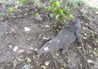 Interesting Places: Guama Crocodile Breeding Farm