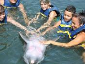 Dolphinarium: Cienfuegos Dolphinarium, Cienfuegos Ciudad