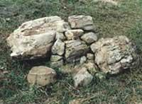 Areas of Natural Interest: Petrified Forest
