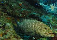 Scuba Diving  Site and Center: Las Anforas  Scuba Diving Site
