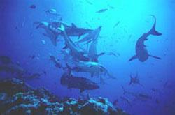 Scuba Diving  Site and Center: Shark´s Point Scuba Diving Site