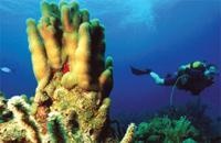 Scuba Diving  Site and Center: Virgen de Altagracia Scuba Diving Site