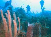 Scuba Diving  Site and Center: El Almirante Scuba Diving Site