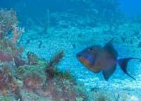 Scuba Diving  Site and Center: La Jaula Scuba Diving Site
