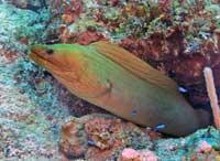 Scuba Diving  Site and Center: las Coloradas  Scuba Diving Site