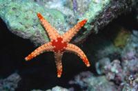 Scuba Diving  Site and Center: The Saturno Cave Scuba Diving Site
