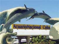 Dolphinarium: National Aquarium of Cuba
