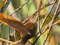 Birdwatching Trails: Las Salinas de Brito Trail