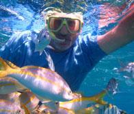 Snokeling with Fish Feeding: Feeding the Fish in  Villa Tortuga Varadero