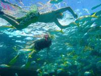 Snokeling with Fish Feeding: Cayo largo