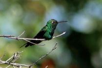 Tour de Observacion de Aves